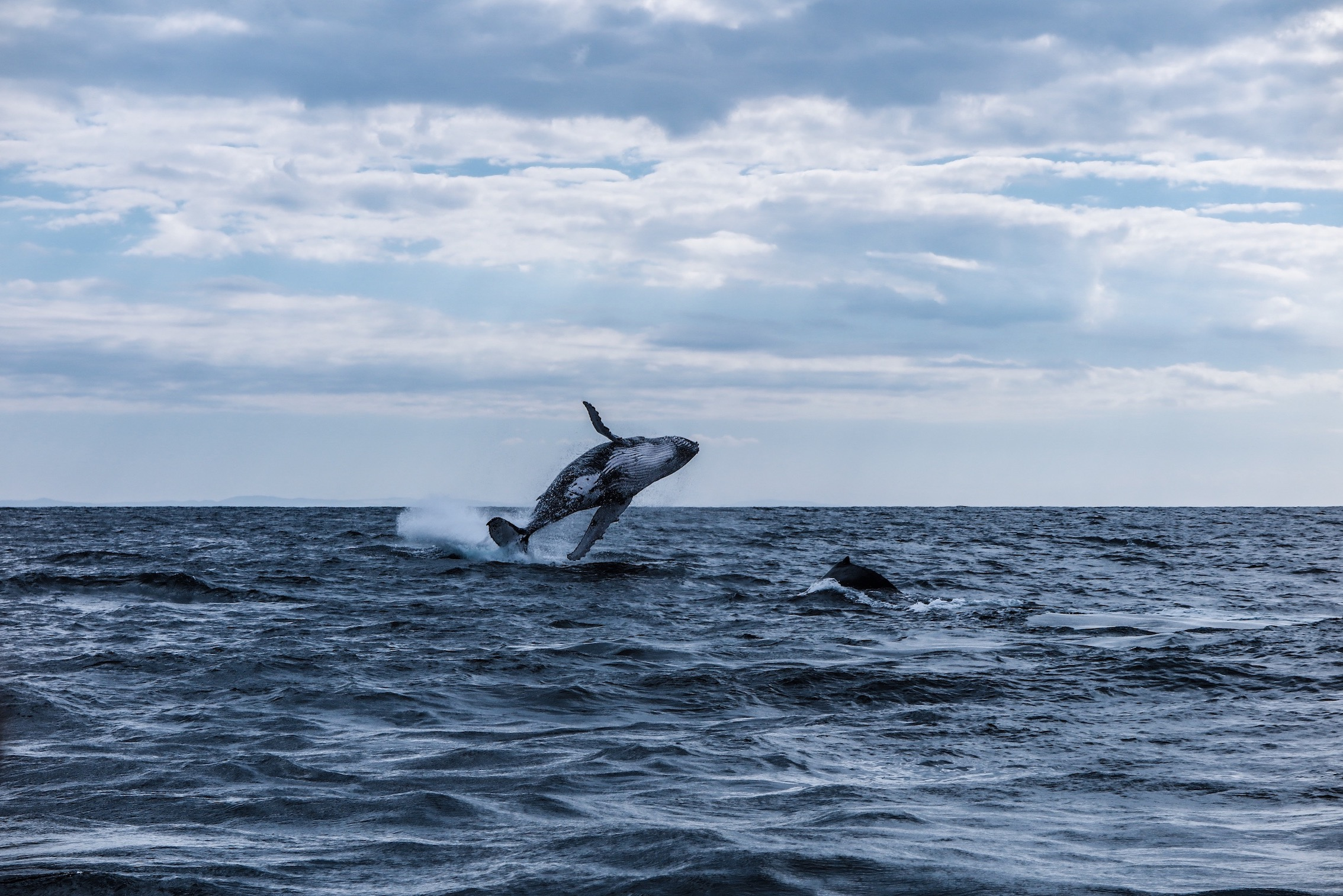 The Humpback Whale East Coast Migration