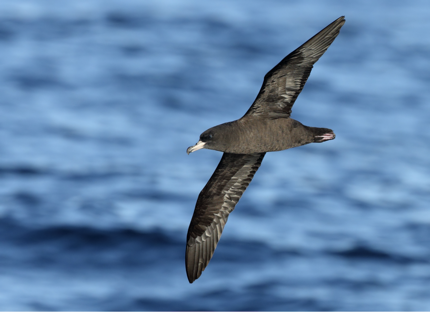 Seabirds And The Plastic Crisis