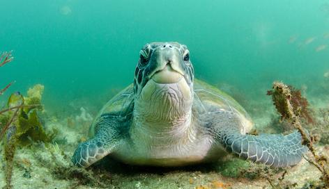turtle%20malcolm.jpg