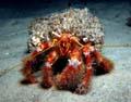 Crustaceans Nelson Bay