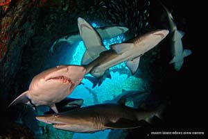 SWR Sharks in Cave